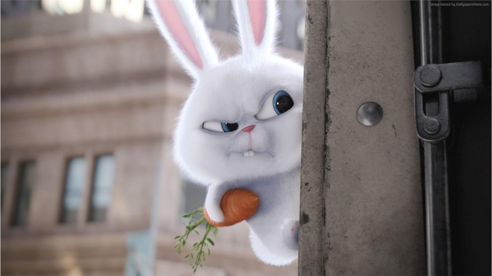 兔玩映画 2155_8644
